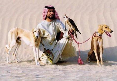 Saluki Dog For Sale In Dubai