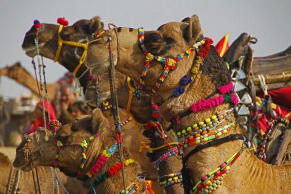 camels-dec